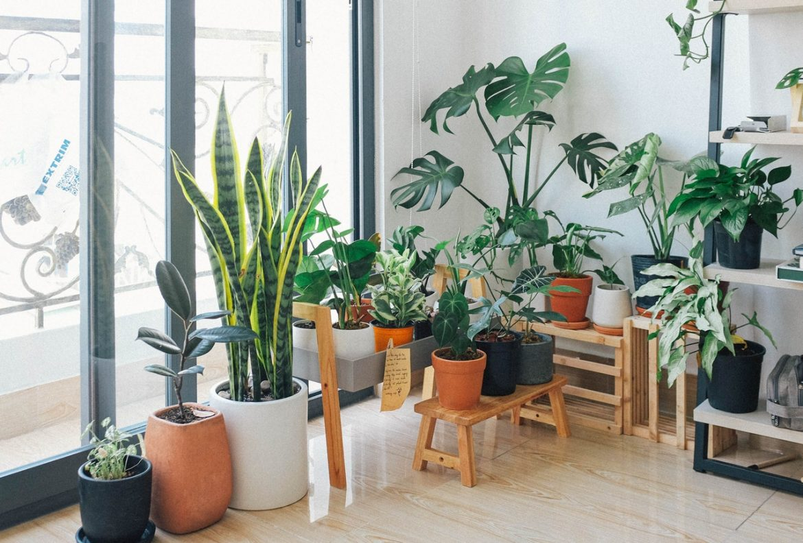 Our Favorite Indoor Plants You Can Have At Your Place